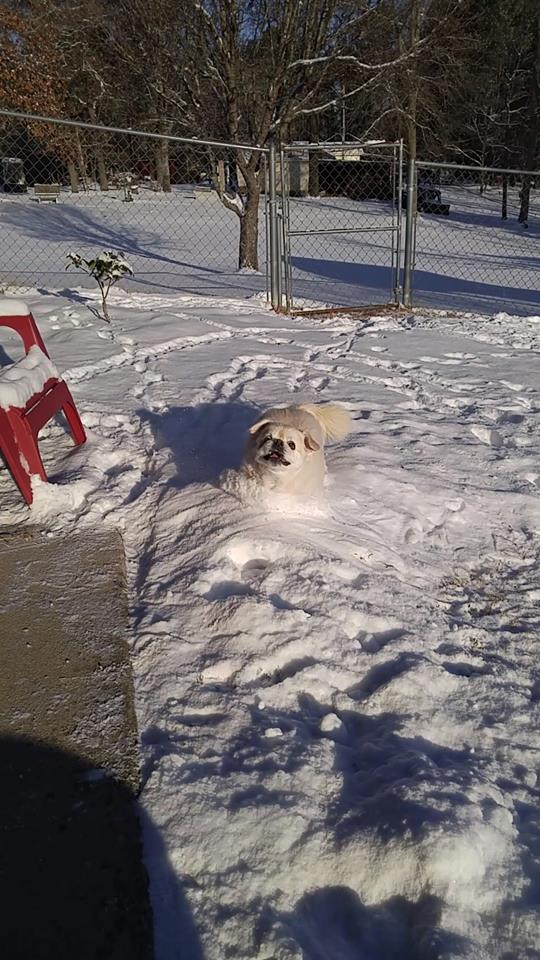 """<div class=""""meta image-caption""""><div class=""""origin-logo origin-image none""""><span>none</span></div><span class=""""caption-text"""">Snowball just being a snowball (Credit: Tracey Haire)</span></div>"""