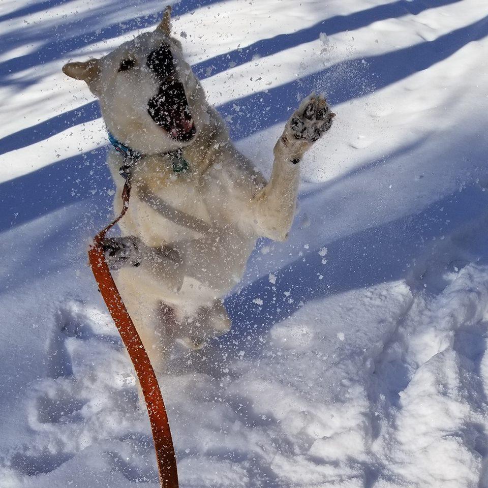 "<div class=""meta image-caption""><div class=""origin-logo origin-image none""><span>none</span></div><span class=""caption-text"">There's snow way this dog isn't having fun (Credit: Christine Roman)</span></div>"