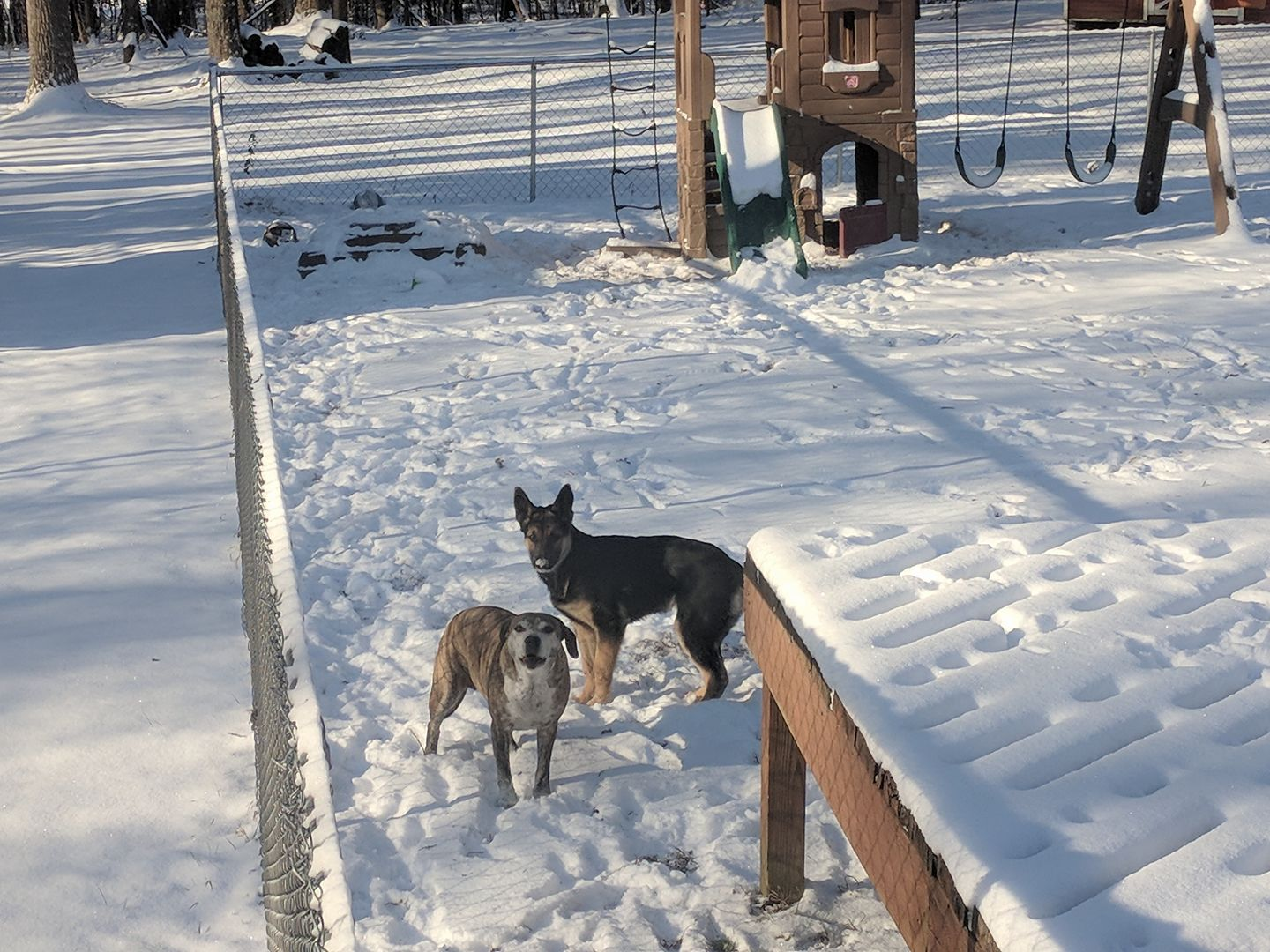 """<div class=""""meta image-caption""""><div class=""""origin-logo origin-image none""""><span>none</span></div><span class=""""caption-text"""">These dogs are ready for some snow fun (Credit: Kristy Gibson)</span></div>"""