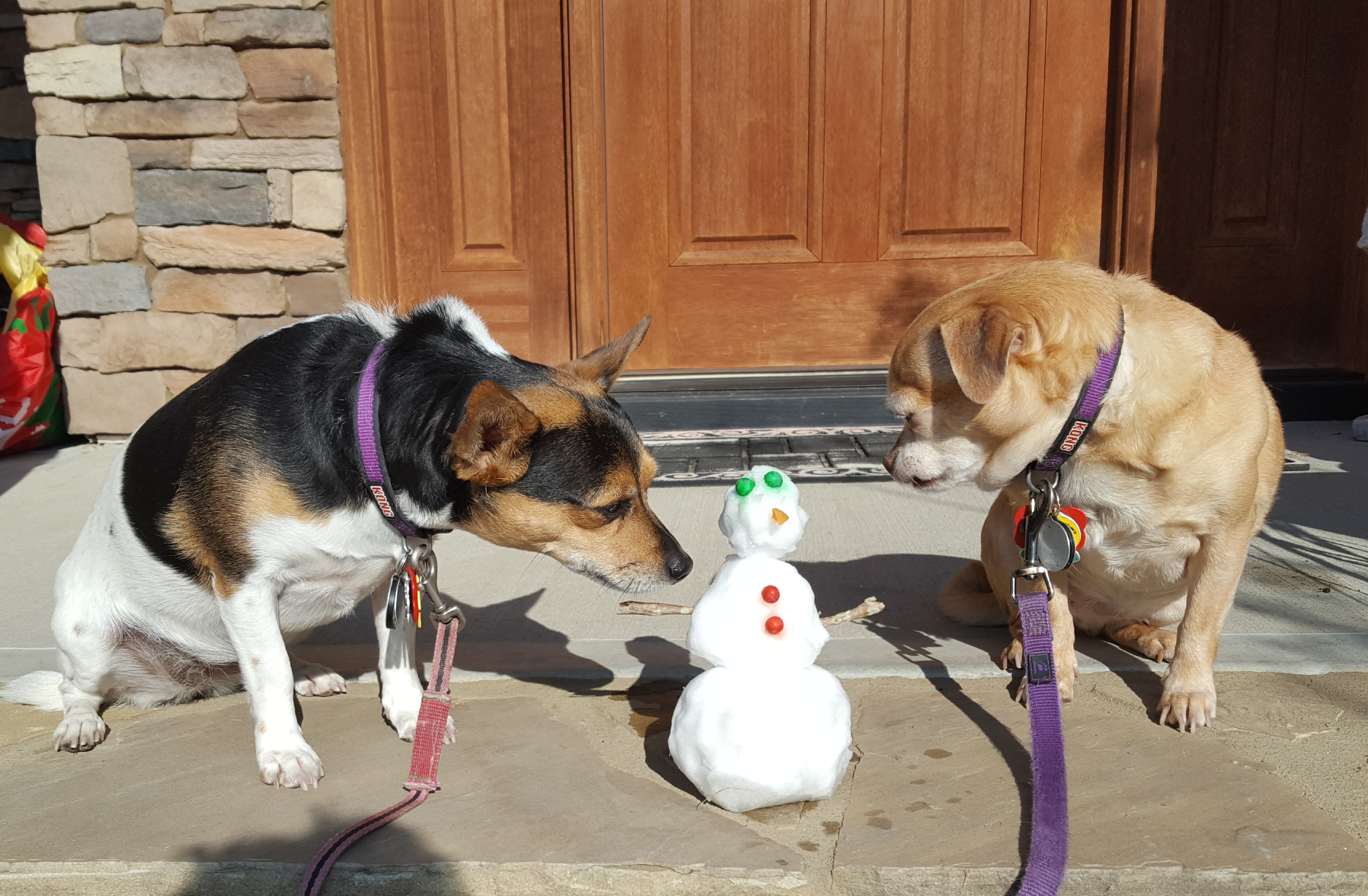 """<div class=""""meta image-caption""""><div class=""""origin-logo origin-image wtvd""""><span>WTVD</span></div><span class=""""caption-text"""">Here are our two pups, Taco, left, and Shelby in Cary enjoying some snow day snowman fun. (Walter Lenz - ABC11 Eyewitness)</span></div>"""