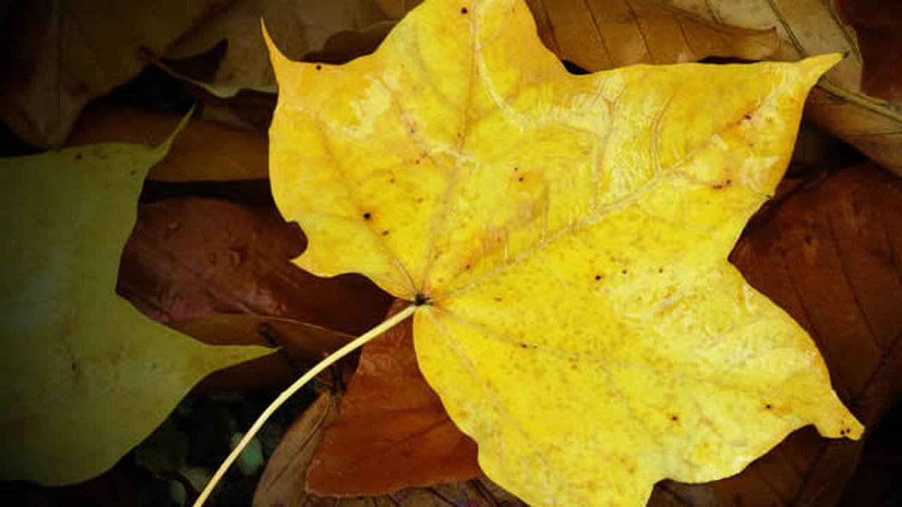 fall foliage trees leaves
