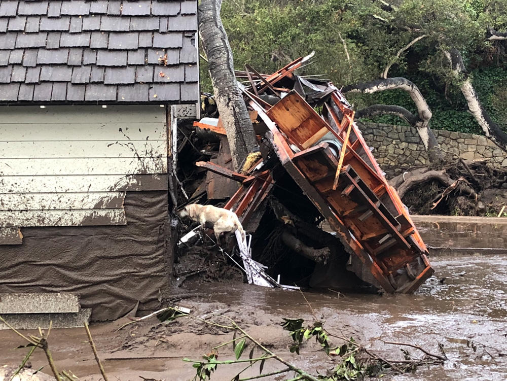 "<div class=""meta image-caption""><div class=""origin-logo origin-image none""><span>none</span></div><span class=""caption-text"">""Santa Barbara County Fire Search Dog Reilly looks for victims in damaged and destroyed homes in Montecito following deadly runoff of mud and debris from heavy rain overnight."" (EliasonMike/Twitter)</span></div>"