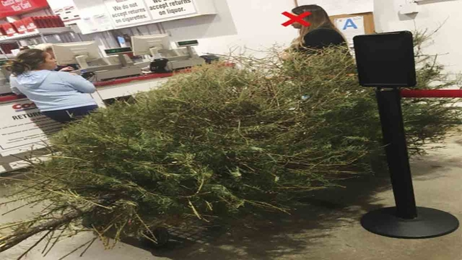 man irate after costco lets woman return dead christmas tree in january abc7chicagocom - Is Costco Open On Christmas Day