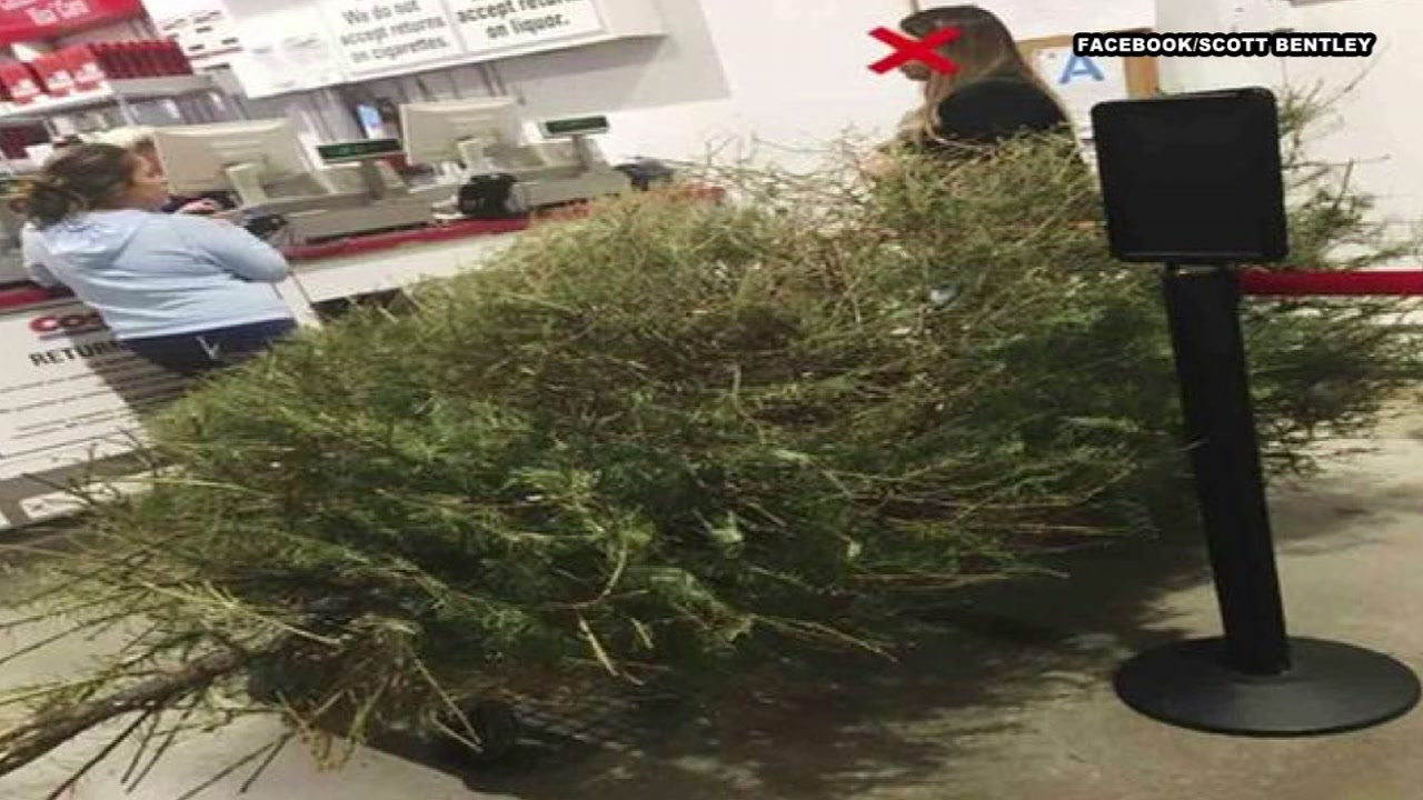 man irate after costco lets woman return dead christmas tree in january jpg 1280x720 sams club