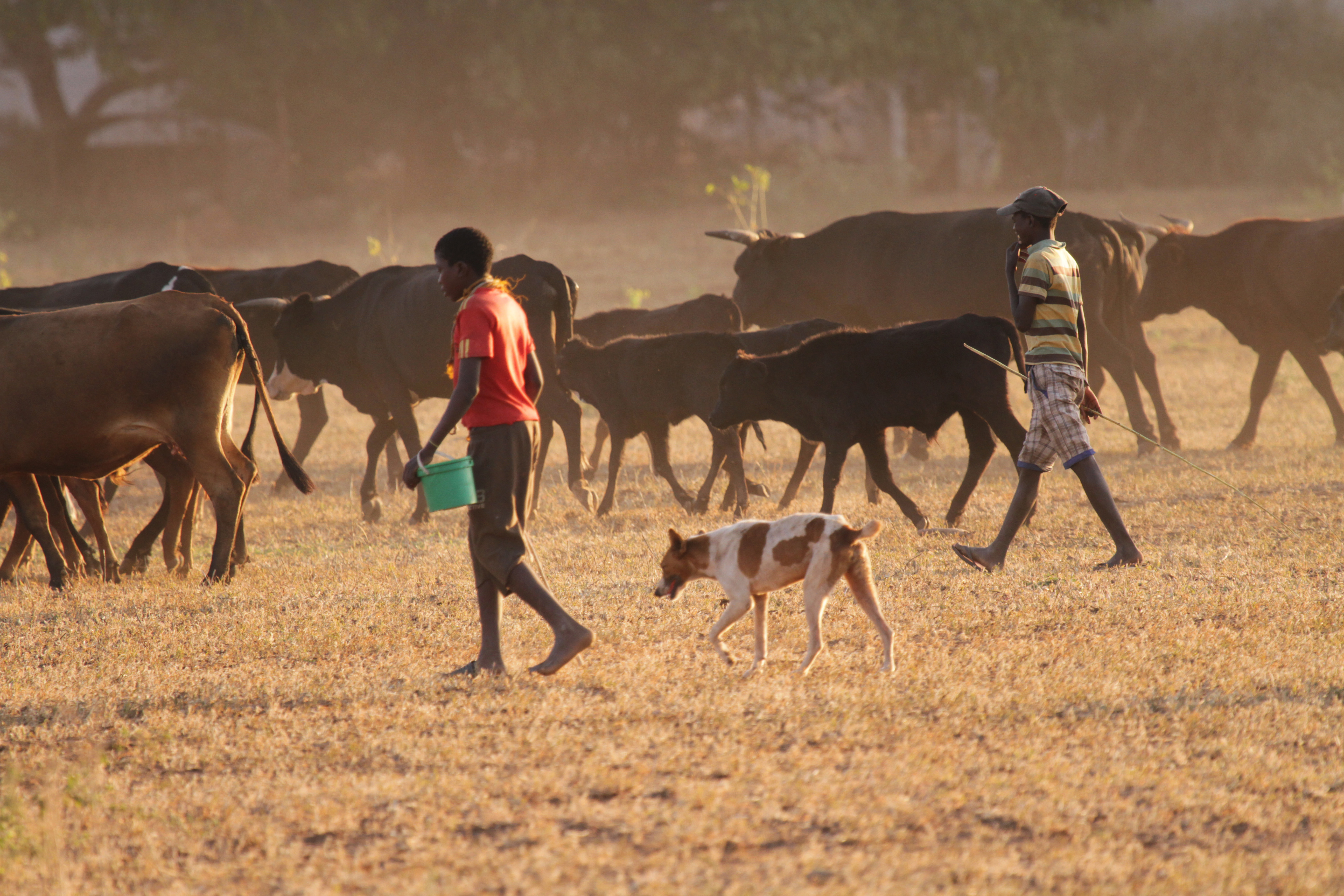 "<div class=""meta image-caption""><div class=""origin-logo origin-image ap""><span>AP</span></div><span class=""caption-text"">Two boys and their dog herd cattle in Chipinge, Zimbabwe. (AP)</span></div>"
