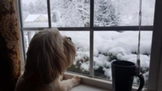 "<div class=""meta image-caption""><div class=""origin-logo origin-image none""><span>none</span></div><span class=""caption-text"">Paula Anka loving the snow (Credit: Amanda Whitt)</span></div>"