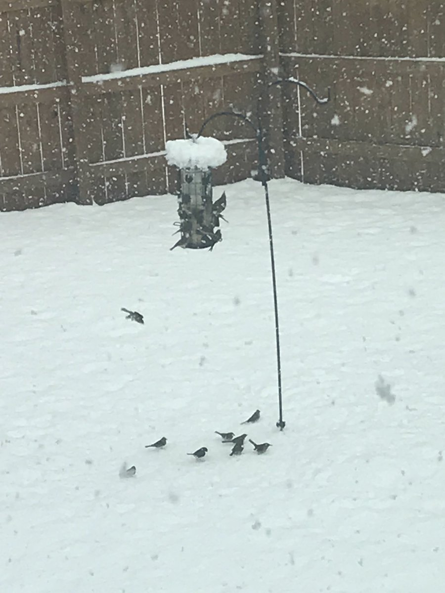 <div class='meta'><div class='origin-logo' data-origin='WTVD'></div><span class='caption-text' data-credit='ABC11 Eyewitness'>This snow is for the birds!</span></div>