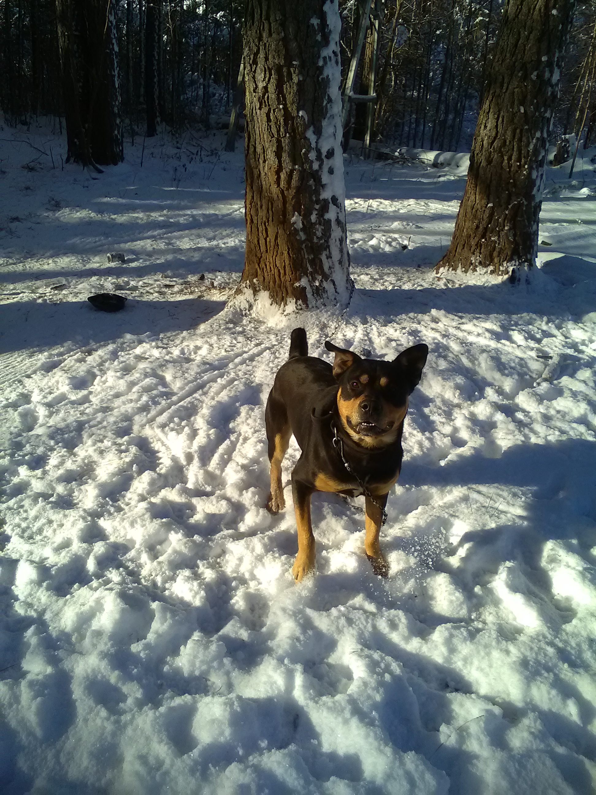 "<div class=""meta image-caption""><div class=""origin-logo origin-image wtvd""><span>WTVD</span></div><span class=""caption-text"">Sam Dalton posing for his owner in the snow. (Helena Williams - ABC11 Eyewitness)</span></div>"