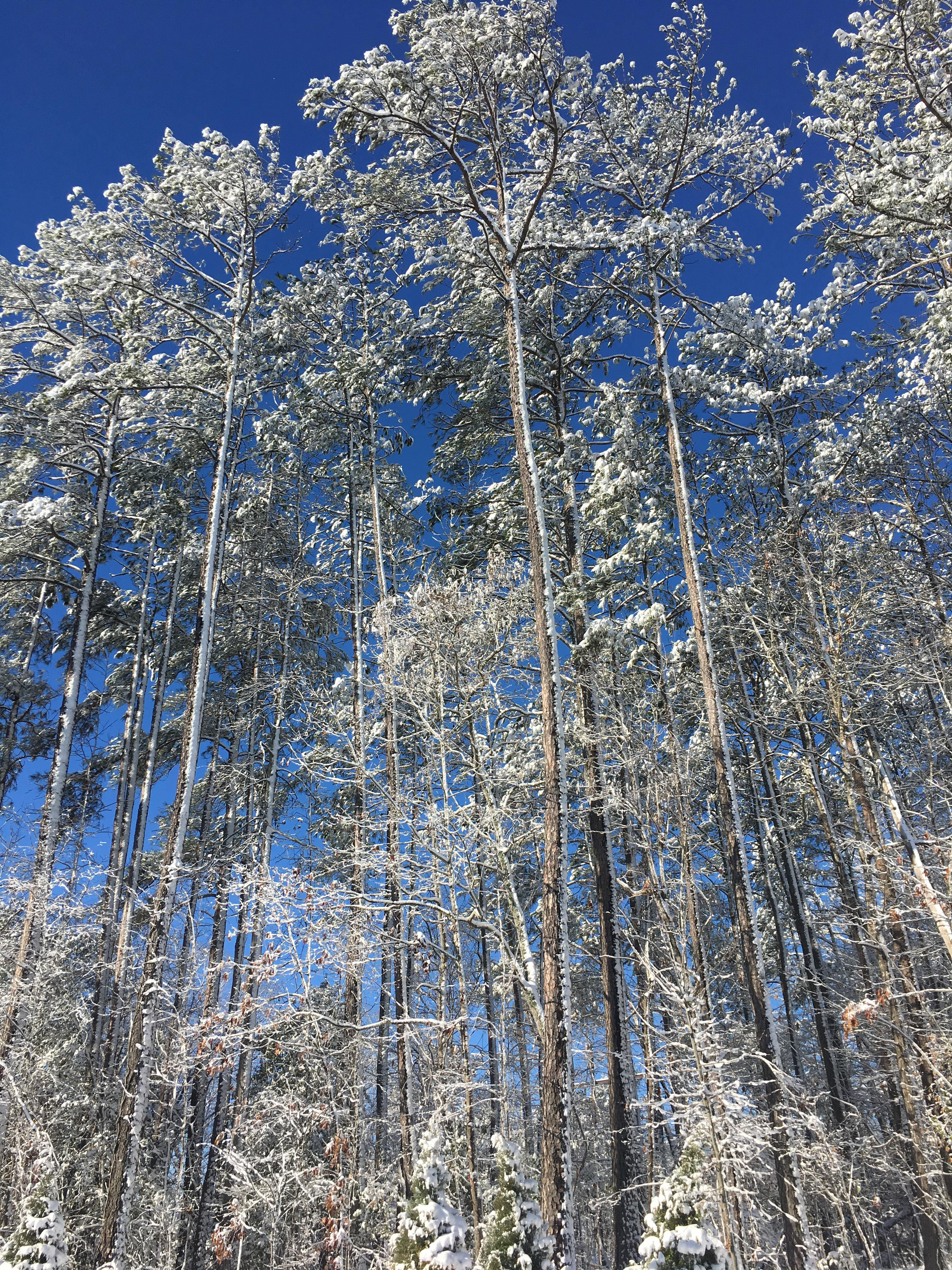 "<div class=""meta image-caption""><div class=""origin-logo origin-image wtvd""><span>WTVD</span></div><span class=""caption-text"">This photo was taken in Fuquay-Varina. This is our view into the backyard! (Brittany Embler - ABC11 Eyewitness)</span></div>"