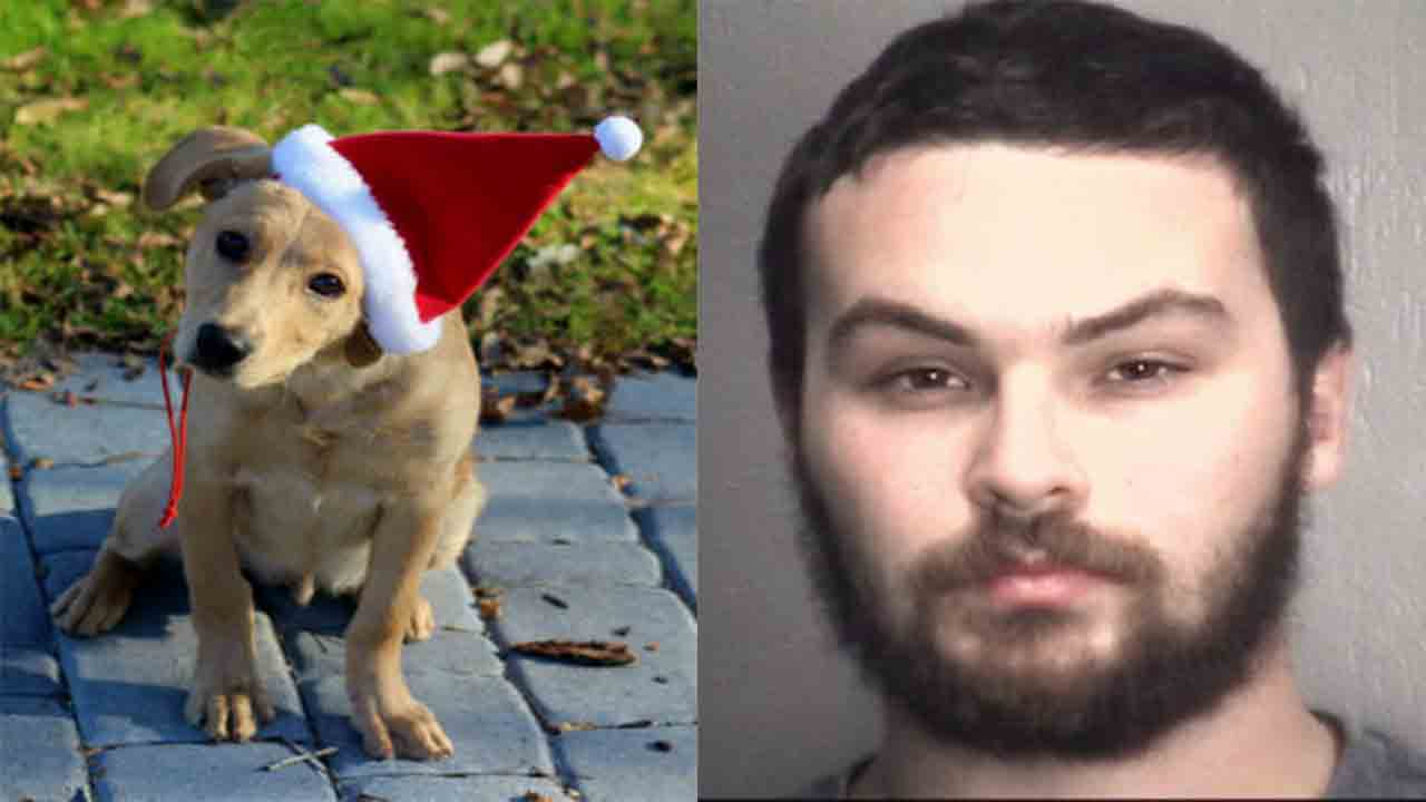 Christopher Simpson was arrested after his girlfriend's family said he beat their dog to death