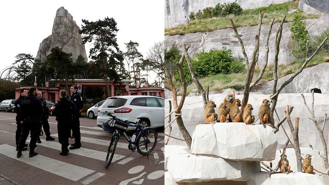 52 baboons escape enclosure at paris zoo abc7.com