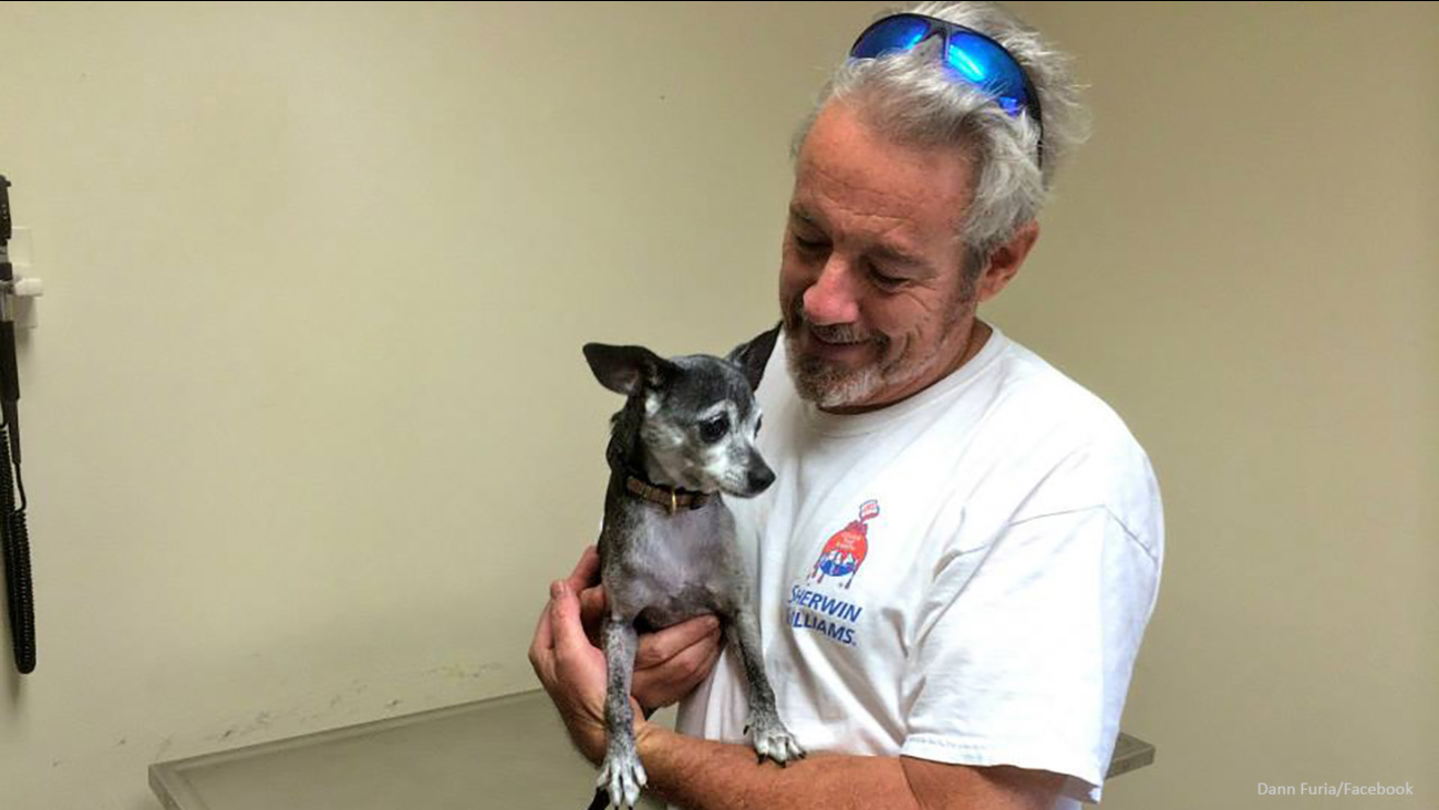 Zeezee the Chihuahua reunited with owner after spending 11 days ...