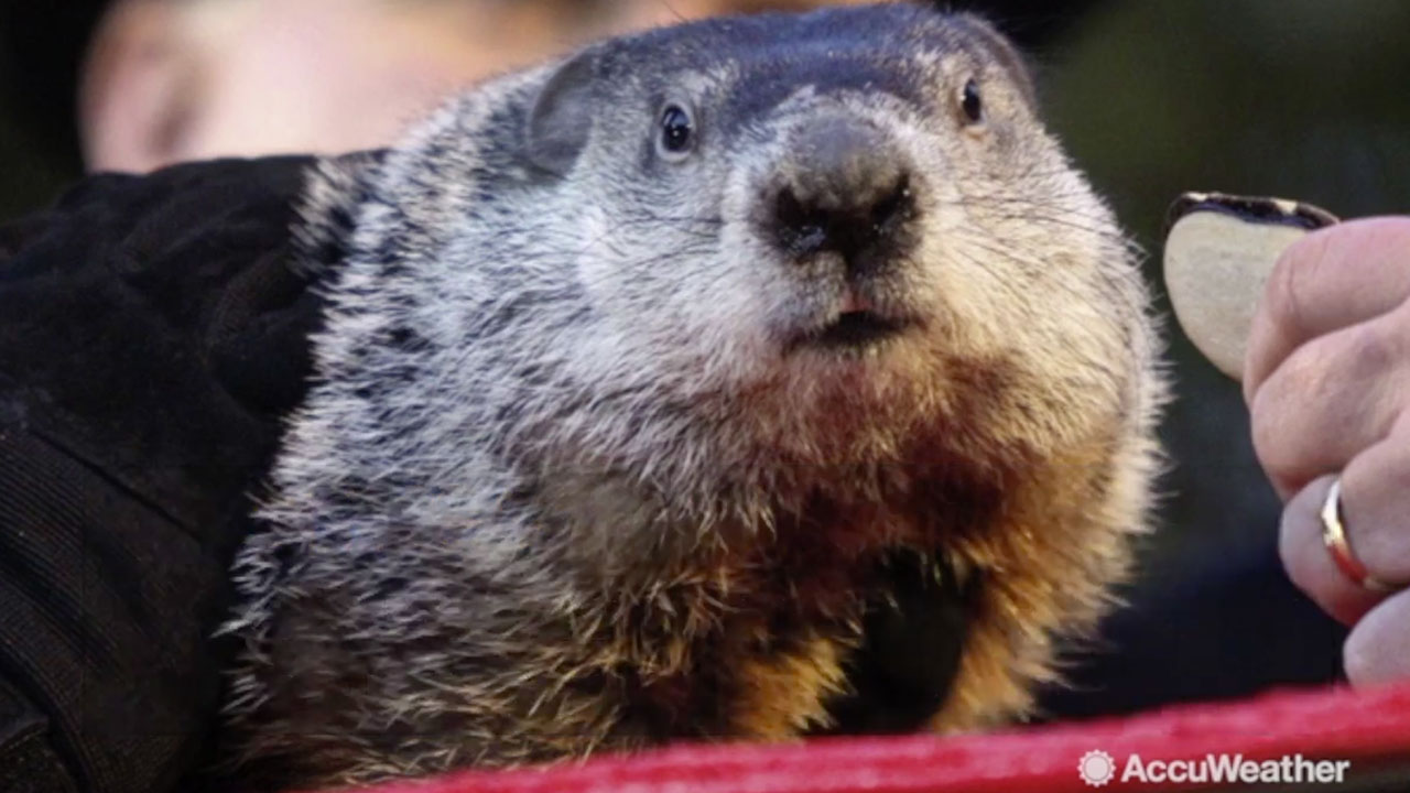 When will punxsutawney phil see his shadow
