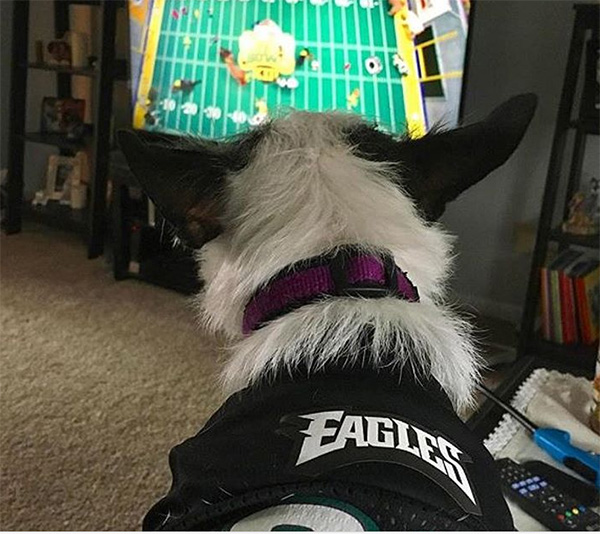 "<div class=""meta image-caption""><div class=""origin-logo origin-image wpvi""><span>WPVI</span></div><span class=""caption-text"">Lady is ready for the big game - From alysedonnelly on Instagram.</span></div>"