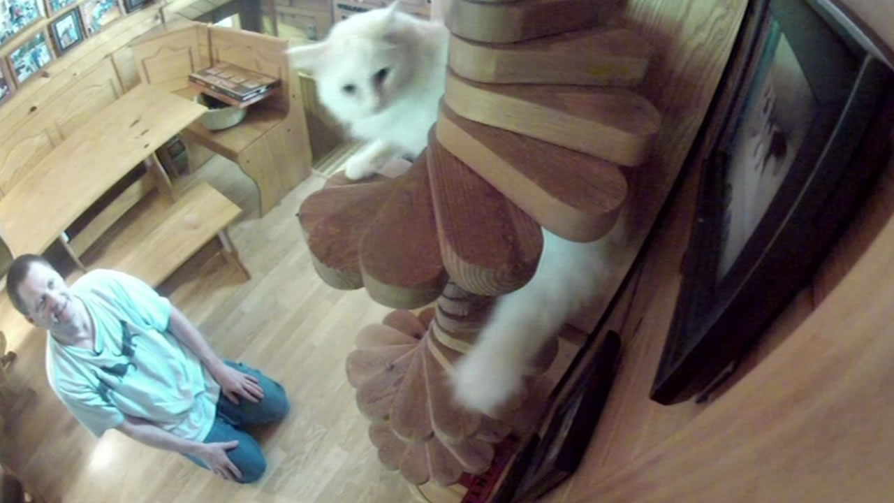 """Cats playing in a """"funhouse"""" designed and built by a Minn, man."""