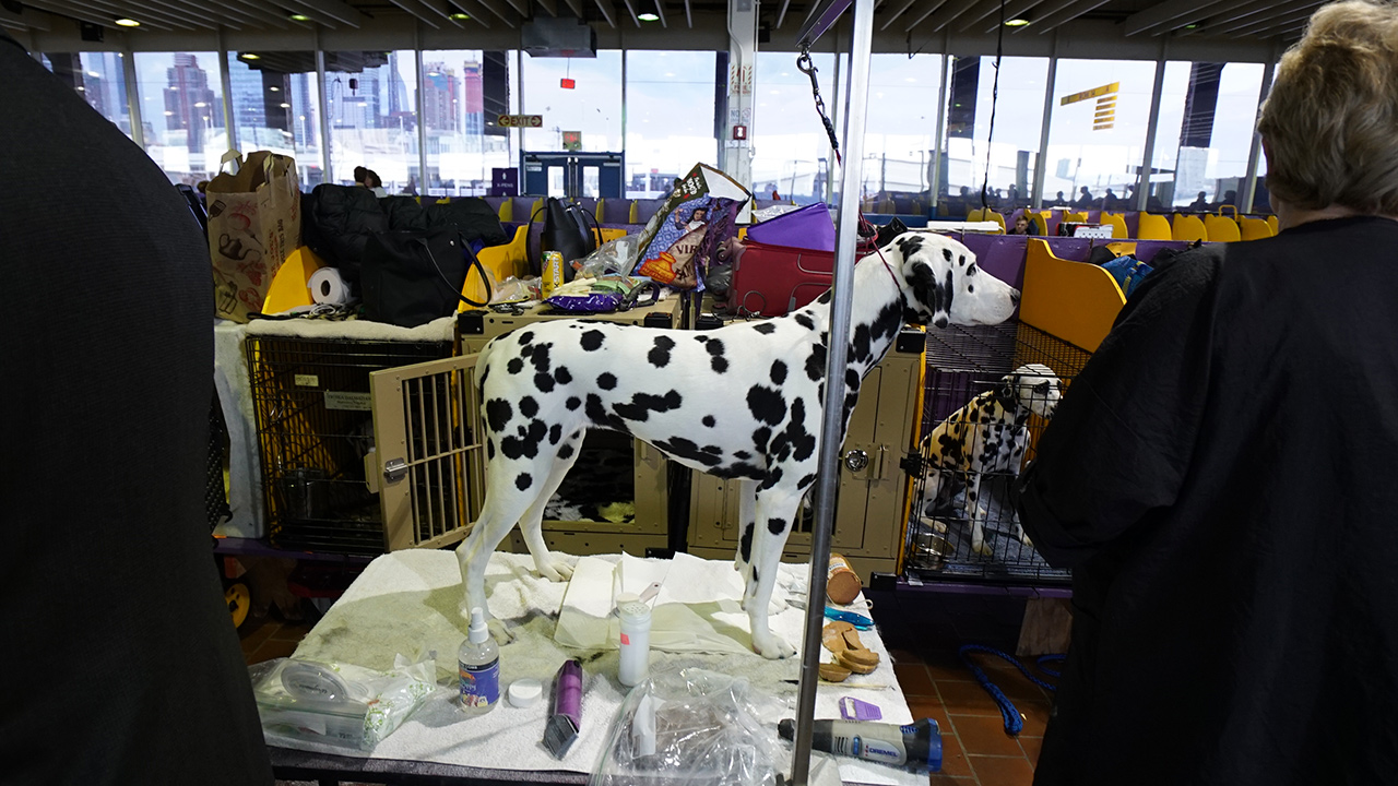 "<div class=""meta image-caption""><div class=""origin-logo origin-image wabc""><span>WABC</span></div><span class=""caption-text"">Photos from the 2018 Westminster Kennel Club Dog Show in New York City. (Bob Monek)</span></div>"