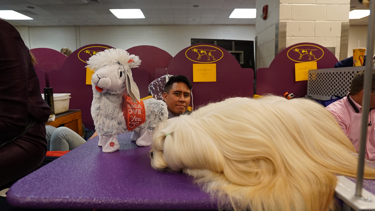 "<div class=""meta image-caption""><div class=""origin-logo origin-image wabc""><span>WABC</span></div><span class=""caption-text"">Photos from backstage at Madison Square Garden during the 2018 Westminster Kennel Club Dog Show. (Bob Monek)</span></div>"