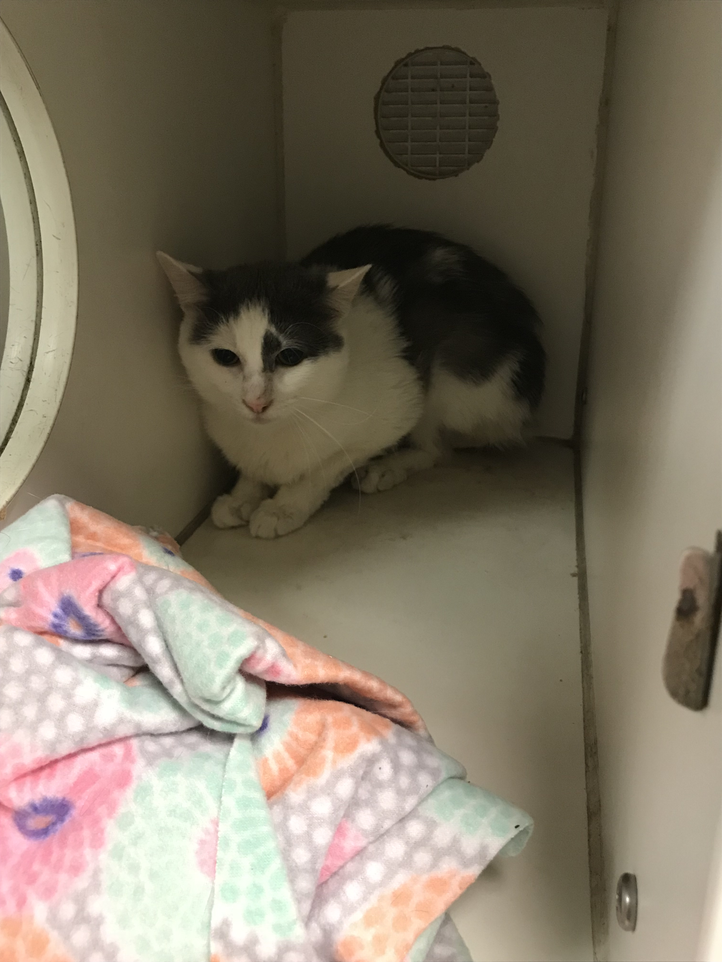 "<div class=""meta image-caption""><div class=""origin-logo origin-image wtvd""><span>WTVD</span></div><span class=""caption-text"">Cats available at the Wake County Animal Center</span></div>"