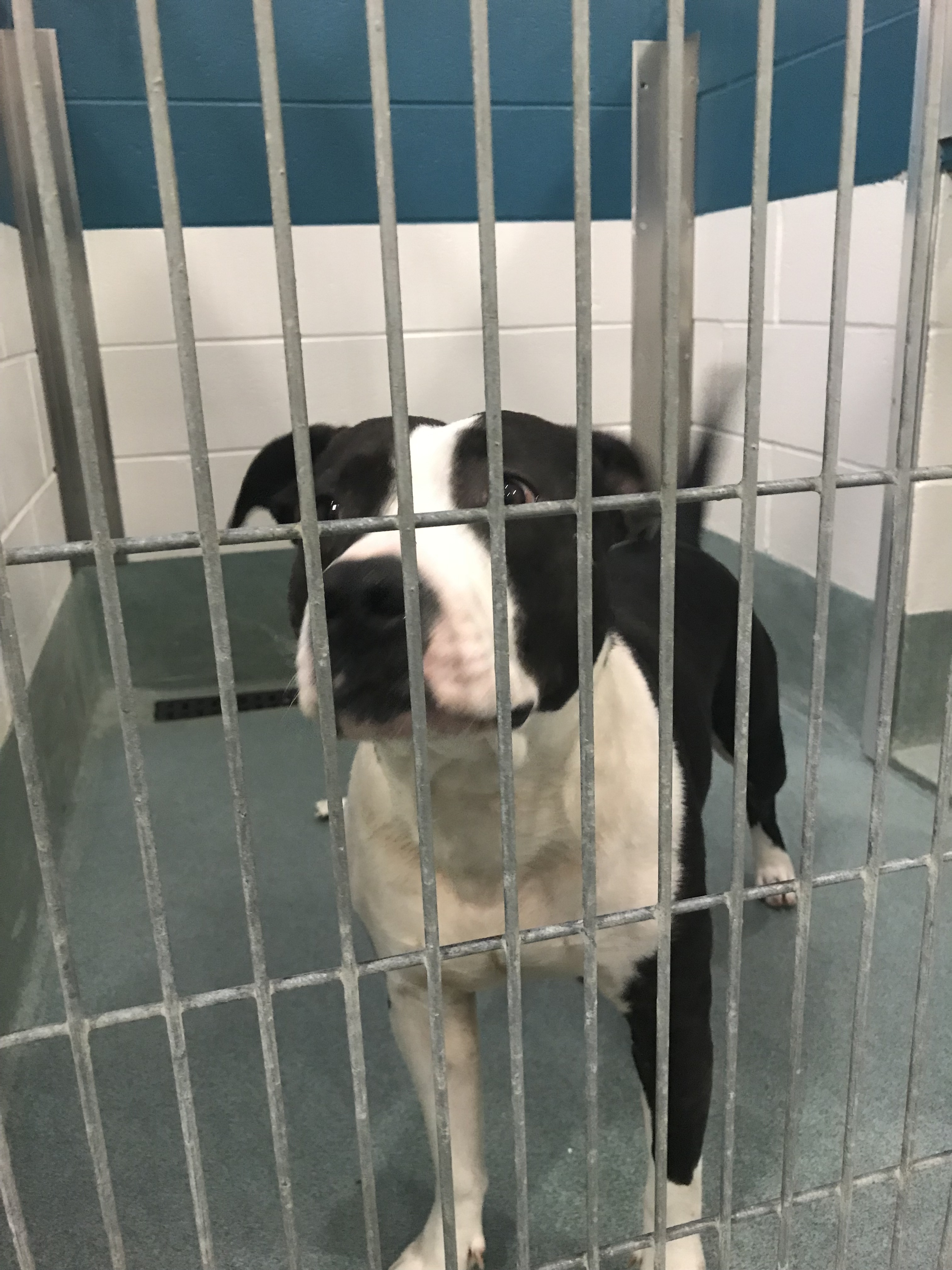"<div class=""meta image-caption""><div class=""origin-logo origin-image wtvd""><span>WTVD</span></div><span class=""caption-text"">Dogs available at the Wake County Animal Center.</span></div>"