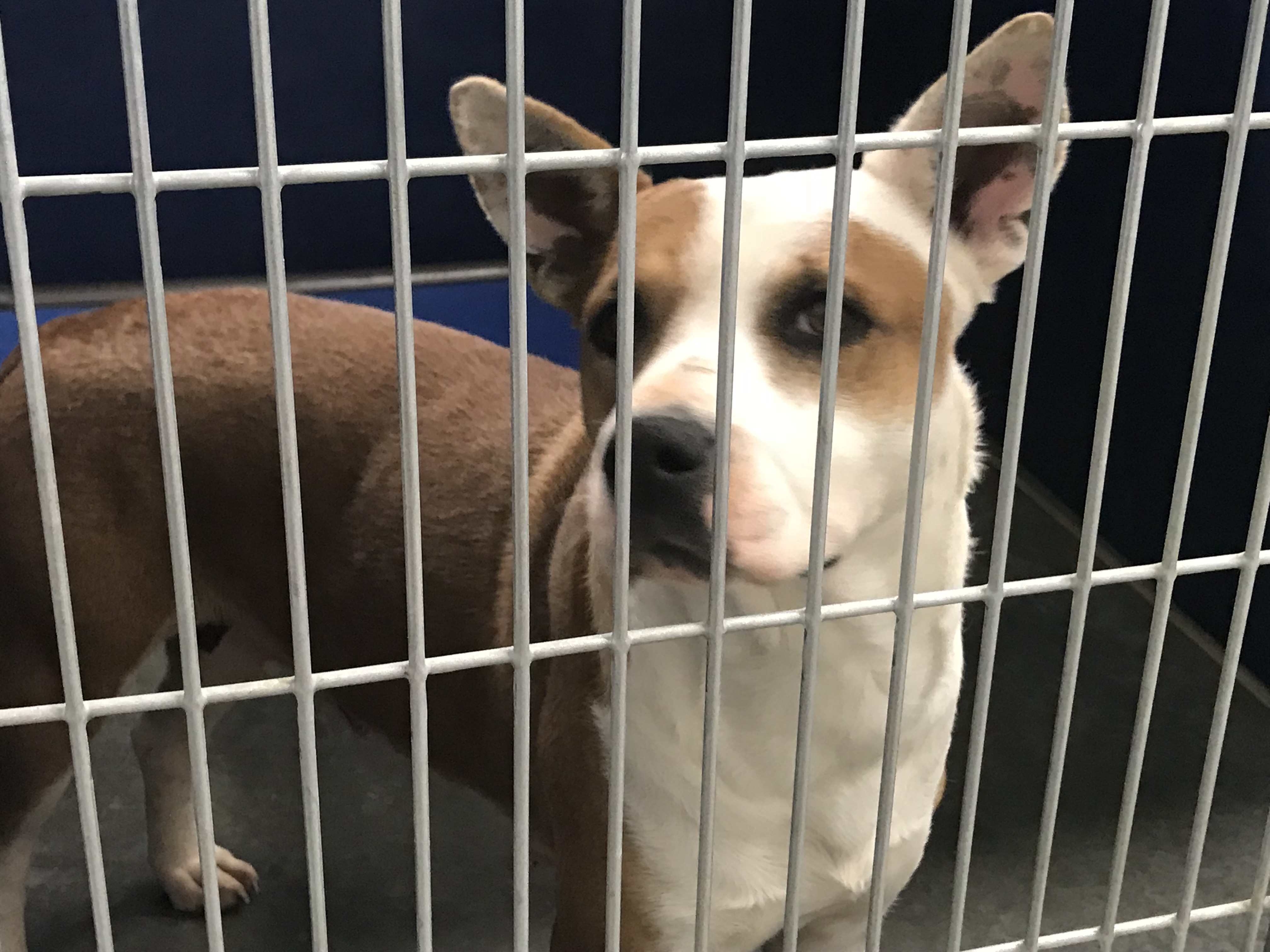 "<div class=""meta image-caption""><div class=""origin-logo origin-image wtvd""><span>WTVD</span></div><span class=""caption-text"">These dogs are available for adoption at the Vance County Animal Shelter.</span></div>"