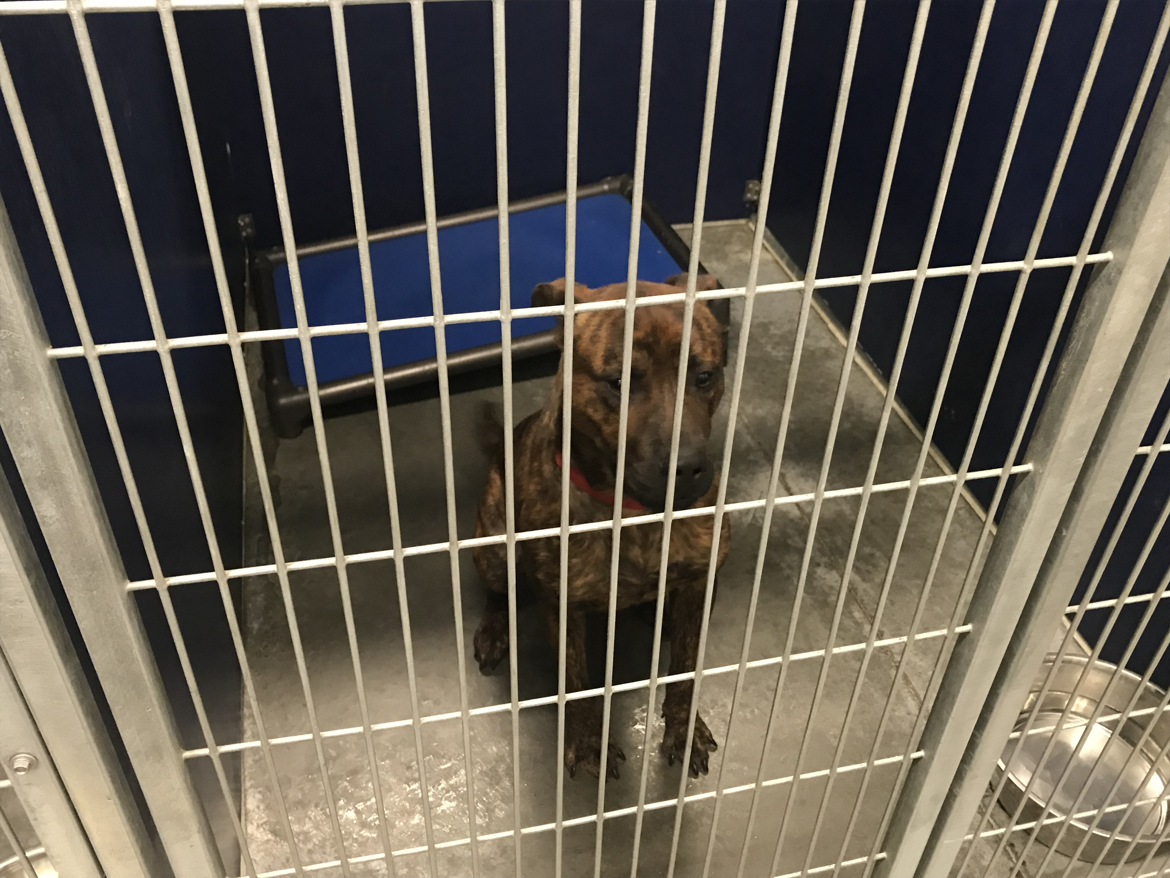 <div class='meta'><div class='origin-logo' data-origin='WTVD'></div><span class='caption-text' data-credit=''>These dogs are available for adoption at the Vance County Animal Shelter.</span></div>