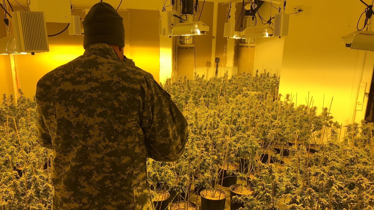 A detective takes photos of a large marijuana grow in an Oak Hills home.