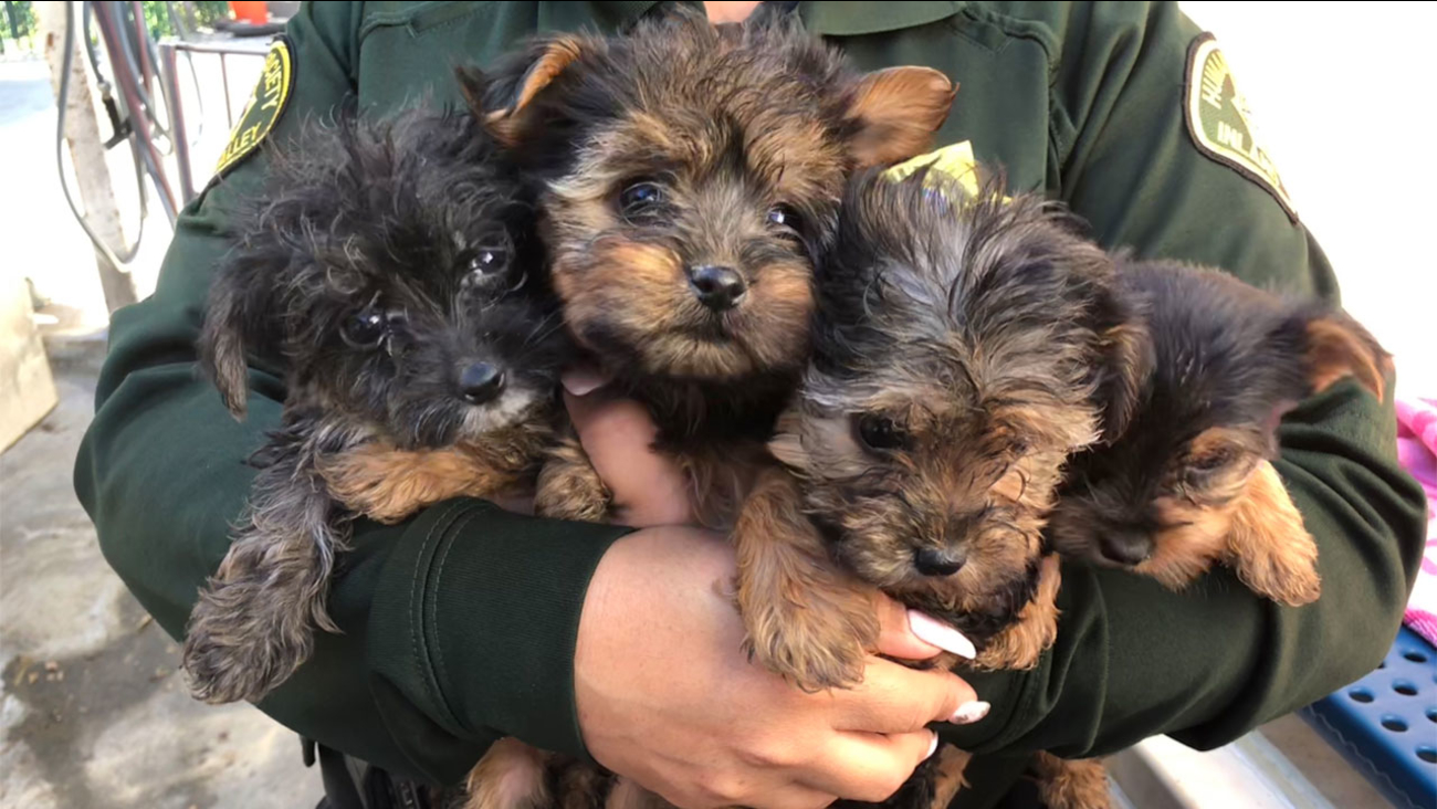 Authorities carried four of eight puppies that were rescued from a filthy home in Ontario on Friday, Feb. 23, 2018.