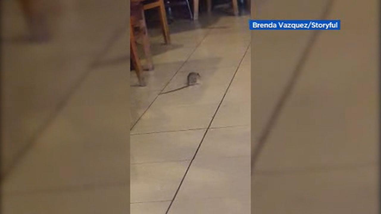 Fresno Restaurant Offers For Unpleasant Rat Surprise Abc7news Com