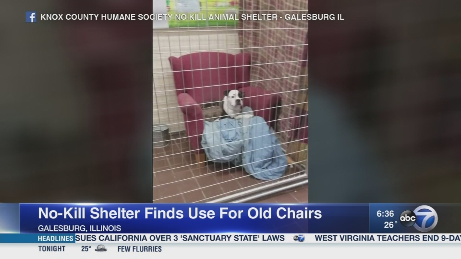 Pets Enjoy Donated Chairs At Illinois No Kill Shelter Abc11