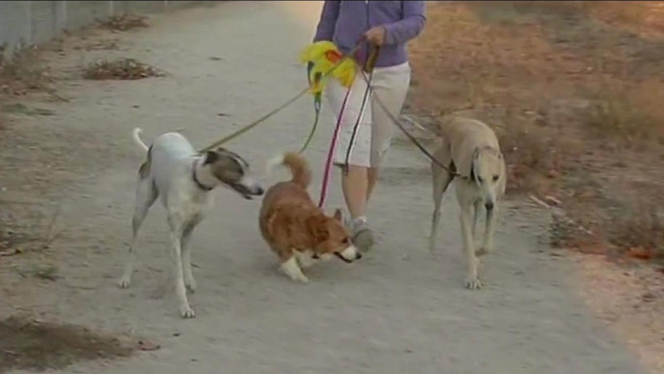 Dogs in Santa Rosa