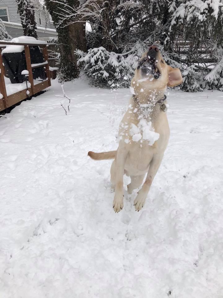 """<div class=""""meta image-caption""""><div class=""""origin-logo origin-image none""""><span>none</span></div><span class=""""caption-text"""">Gunner enjoys snacking on the snow! (Elizabeth Ionata)</span></div>"""