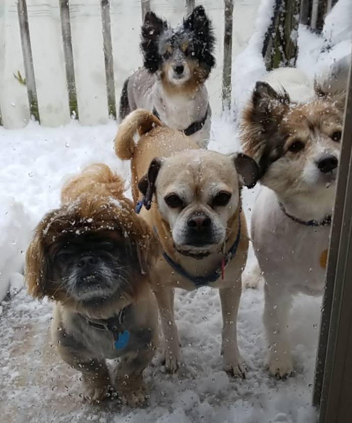 """<div class=""""meta image-caption""""><div class=""""origin-logo origin-image none""""><span>none</span></div><span class=""""caption-text"""">These guys look like they're ready to come back inside... (Linda Lee Riley)</span></div>"""