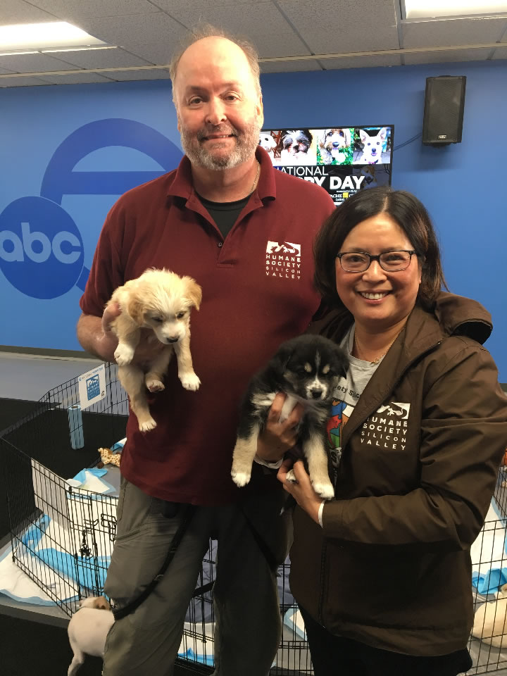 <div class='meta'><div class='origin-logo' data-origin='none'></div><span class='caption-text' data-credit='KGO-TV'>Puppies with the Humane Society of Silicon Valley are seen at ABC7 in San Francisco for National Puppy Day on Friday, March 23, 2018.</span></div>