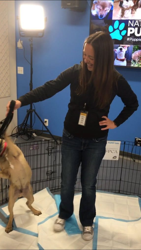 <div class='meta'><div class='origin-logo' data-origin='none'></div><span class='caption-text' data-credit='KGO-TV'>The San Francisco SPCA visited ABC7 in San Francisco for National Puppy Day on Friday, March 23, 2018.</span></div>