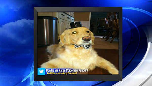"""<div class=""""meta image-caption""""><div class=""""origin-logo origin-image none""""><span>none</span></div><span class=""""caption-text"""">Big Dog Sunday - Sept. 28, 2014</span></div>"""