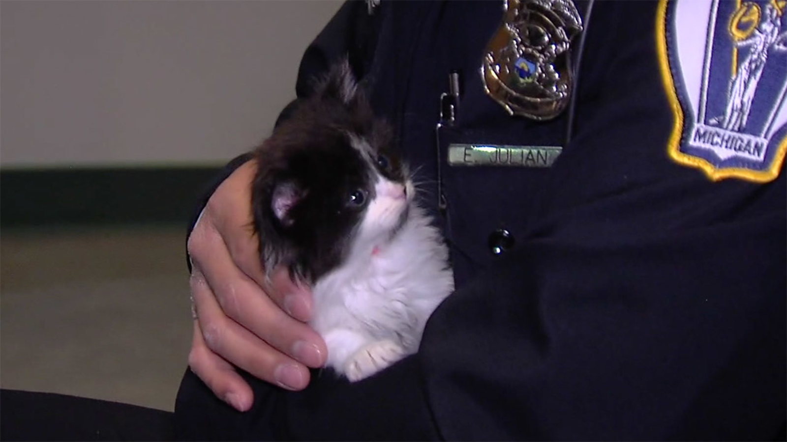 Kitty cop? This Mich  police department is on the hunt for police cat