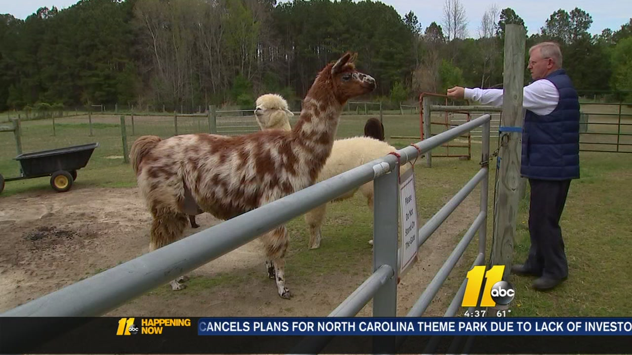 Alpaca Dreams One Of 45 Farms On This Year S Piedmont Farm Tour Abc11 Raleigh Durham