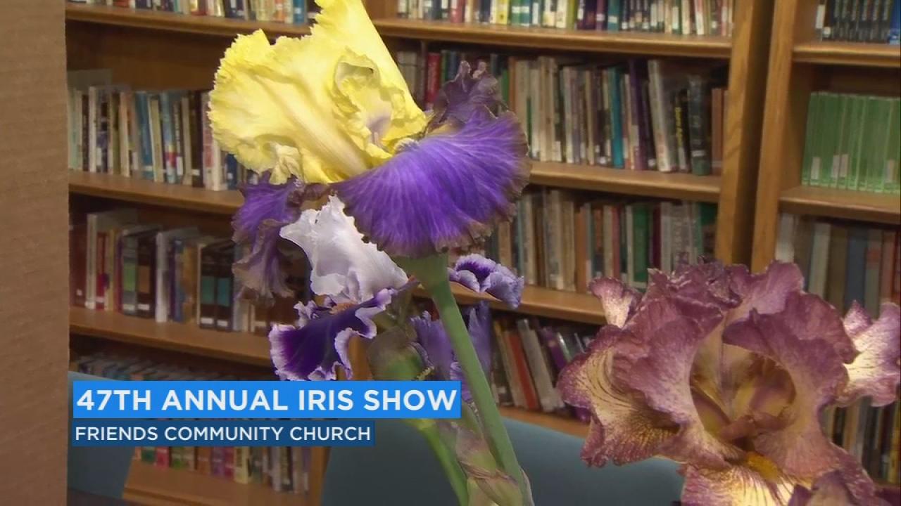 Fresnos Iris Society Gearing Up For Annual Showcase At Sierra Vista