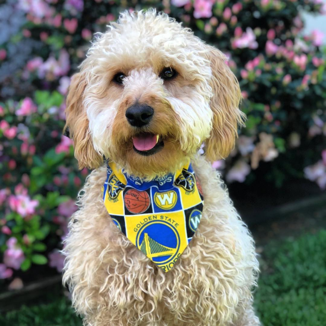 <div class='meta'><div class='origin-logo' data-origin='none'></div><span class='caption-text' data-credit='Photo submitted to KGO-TV by miss.marlowe.doodle./Instagram'>Warriors fans show their spirit during the 2017-2018 season. Share your photos using #DubsOn7 and you may see them online or on TV!</span></div>