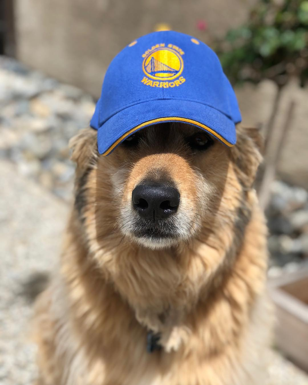 <div class='meta'><div class='origin-logo' data-origin='none'></div><span class='caption-text' data-credit='Photo submitted to KGO-TV by @livin_like_scooter via Instagram'>Warriors fans show their spirit during the 2017-2018 season. Share your photos using #DubsOn7 and you may see them online or on TV!</span></div>