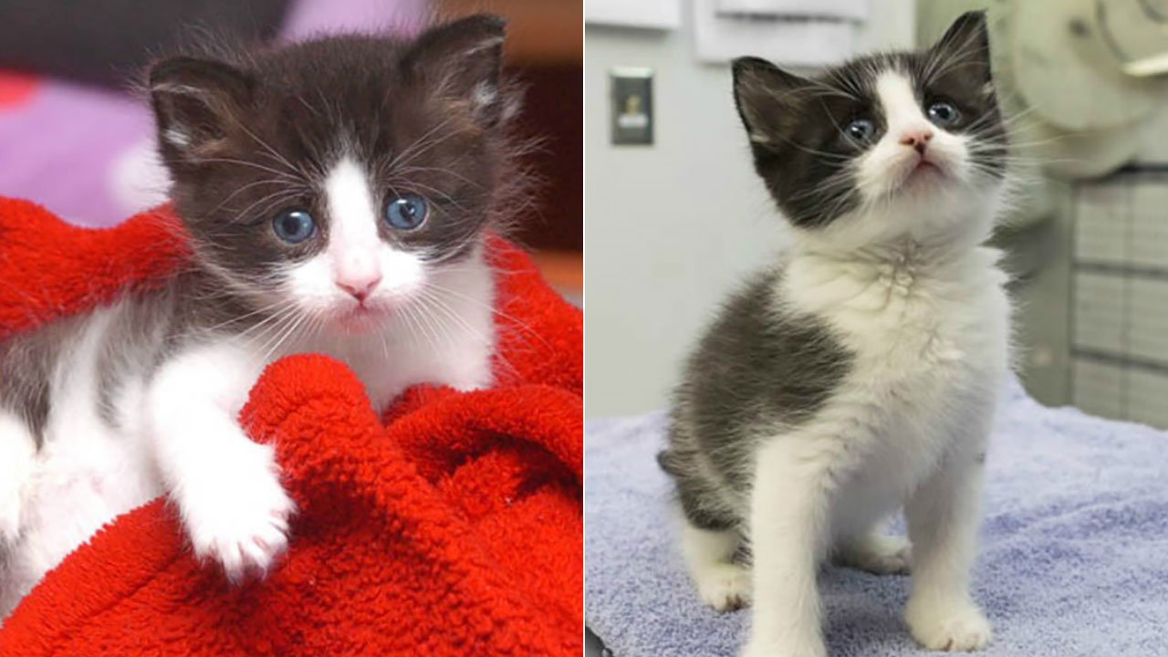 When a staffer at a Hawthorne animal shelter heard mewing, she was led to a mailbox and found an abandoned kitten inside.