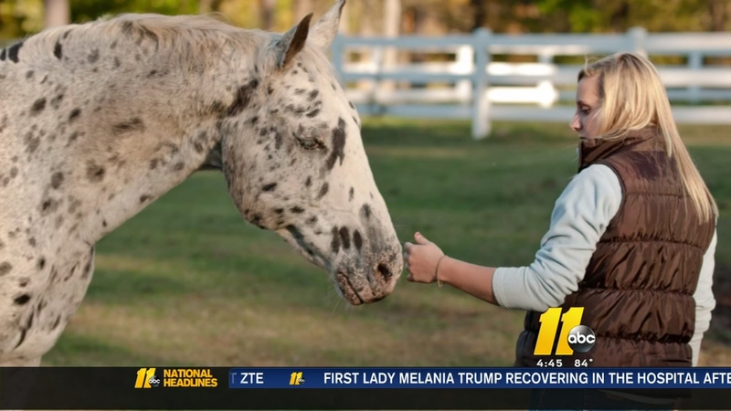 Blind horse helps others to 'see'