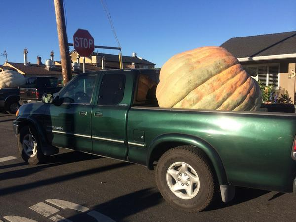 """<div class=""""meta image-caption""""><div class=""""origin-logo origin-image """"><span></span></div><span class=""""caption-text"""">There are pumpkins, and then there are pumpkins!</span></div>"""