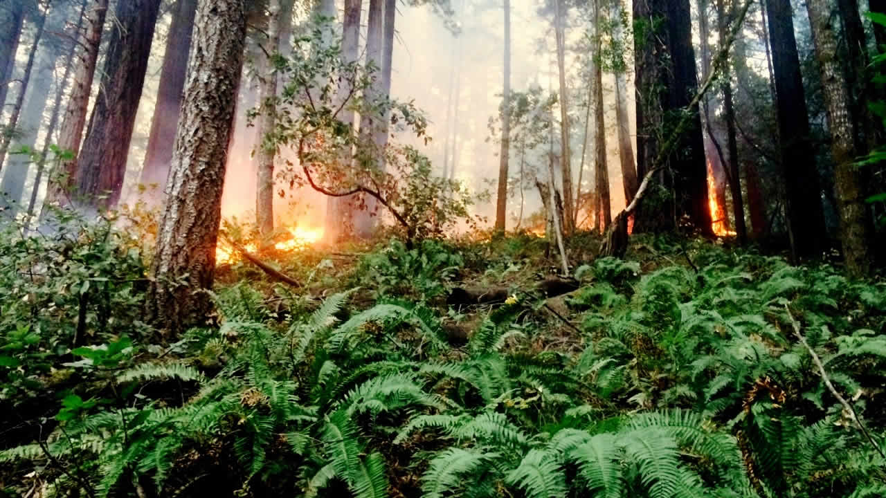 Crews battling fire that burned about four acres of one of Marin County's largest redwood groves