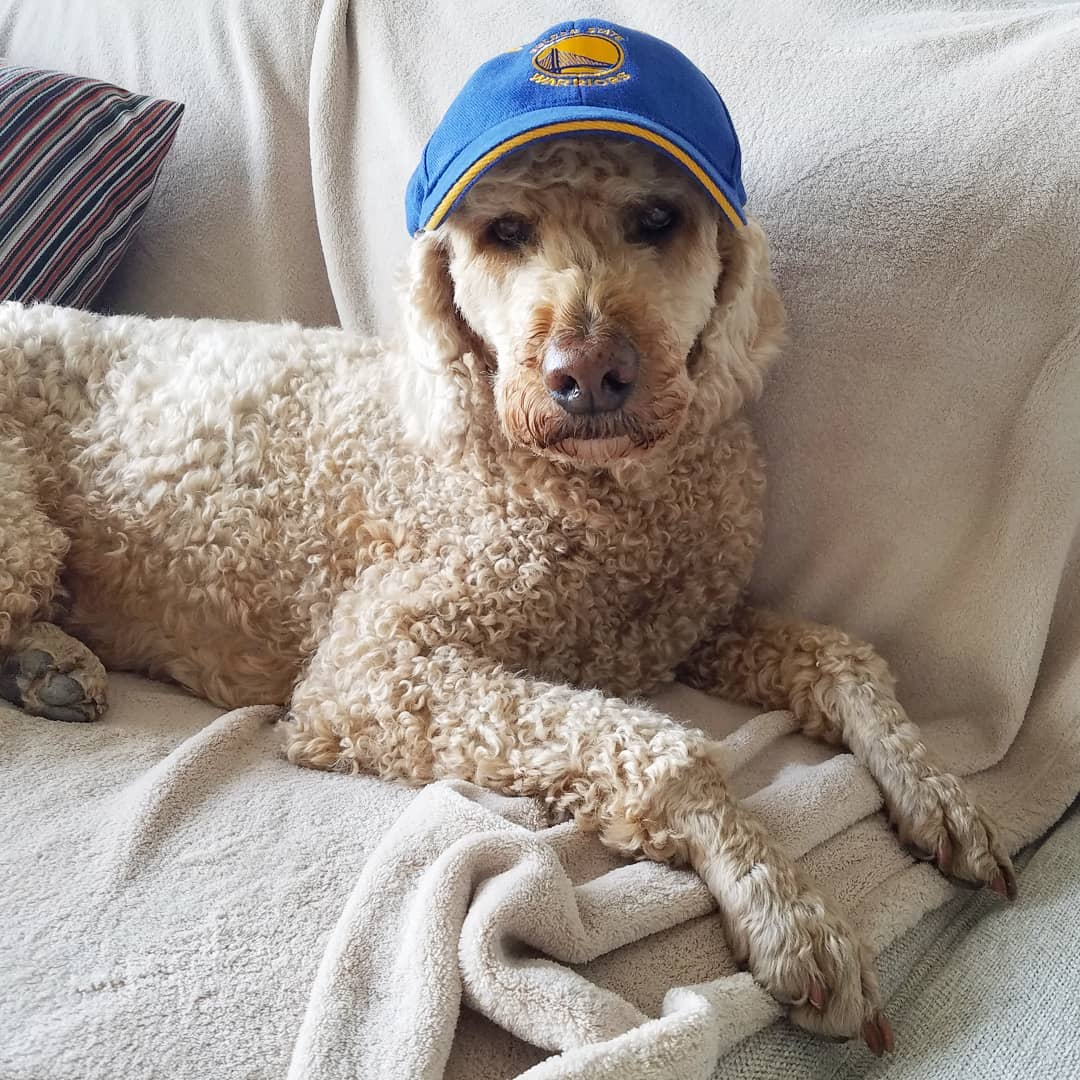 <div class='meta'><div class='origin-logo' data-origin='none'></div><span class='caption-text' data-credit='Photo submitted to KGO-TV by @kooperdoodle/Instagram'>Warriors fans show their spirit during the 2017-2018 season. Share your photos using #DubsOn7 and you may see them online or on TV!</span></div>