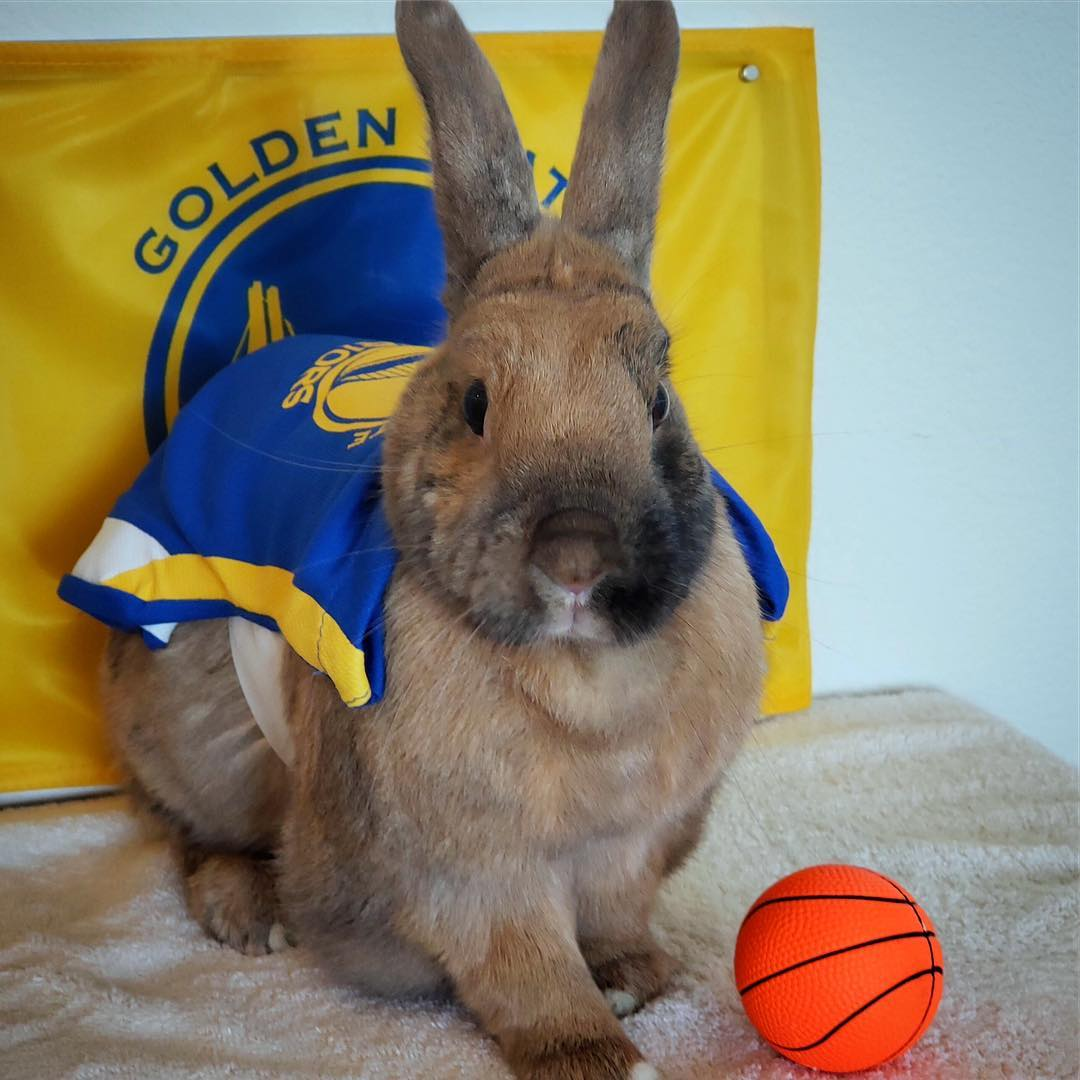 <div class='meta'><div class='origin-logo' data-origin='none'></div><span class='caption-text' data-credit='Photo submitted to KGO-TV by @bunny.flop/Instagram'>Warriors fans show their spirit during the 2017-2018 season. Share your photos using #DubsOn7 and you may see them online or on TV!</span></div>