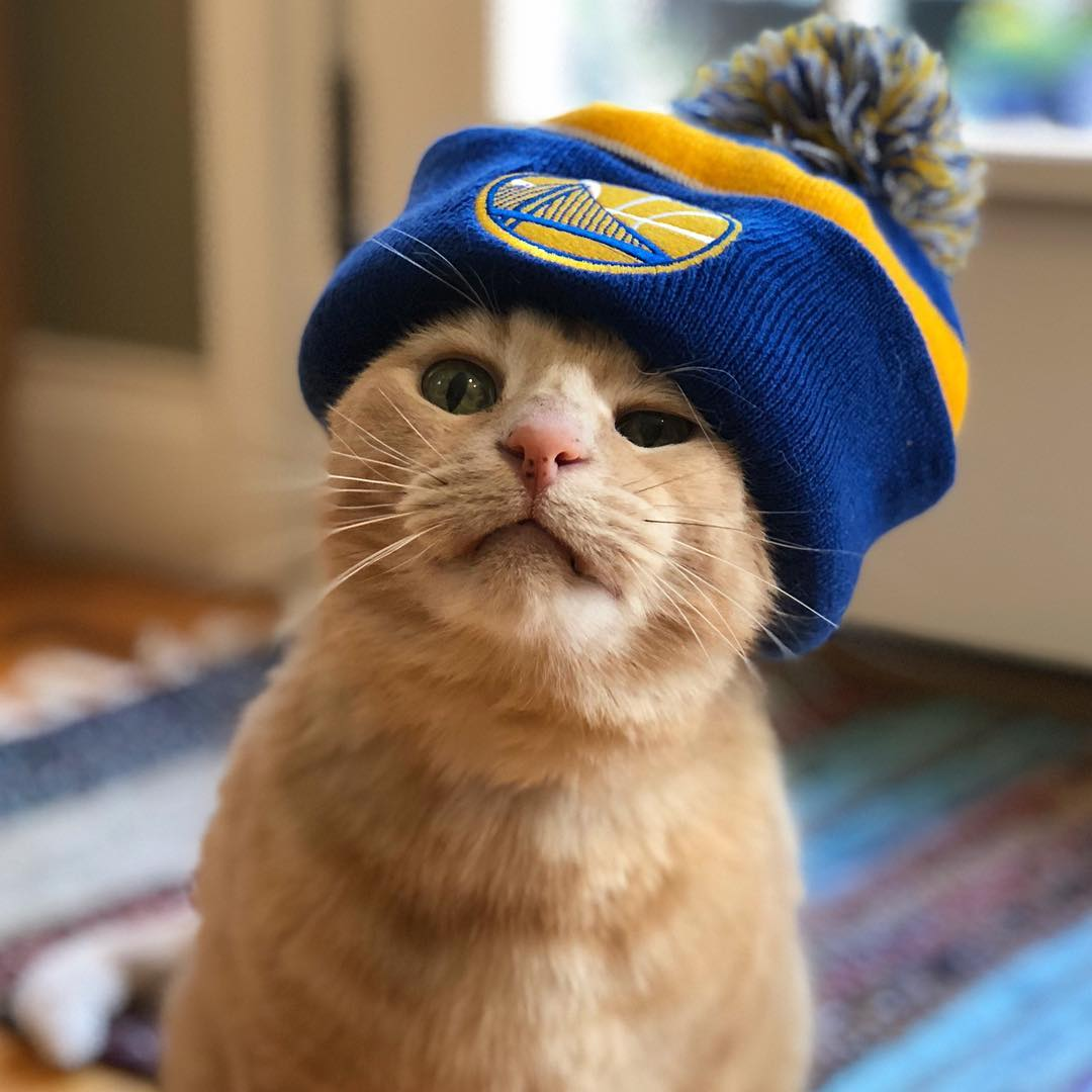 <div class='meta'><div class='origin-logo' data-origin='none'></div><span class='caption-text' data-credit='Photo submitted to KGO-TV by @pickles.and.maya/Instagram'>Warriors fans show their spirit during the 2017-2018 season. Share your photos using #DubsOn7 and you may see them online or on TV!</span></div>