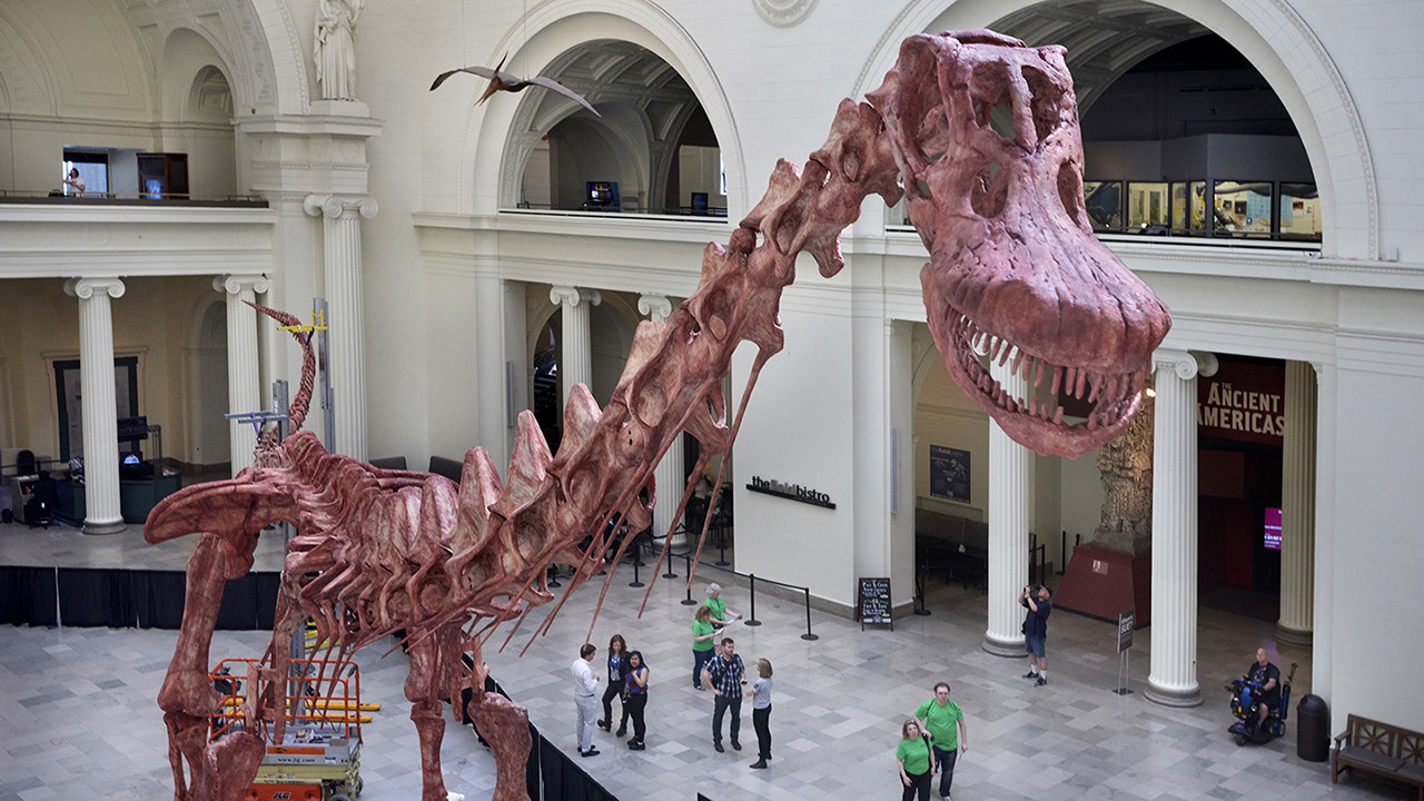 Field Museum Scientists Assemble Maximo Largest Dinosaur