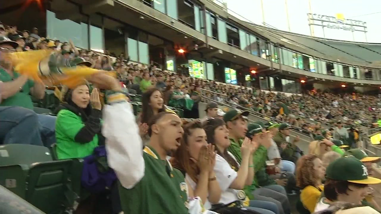 Oakland Athletics fans cheer during a home game in this undated file photo.