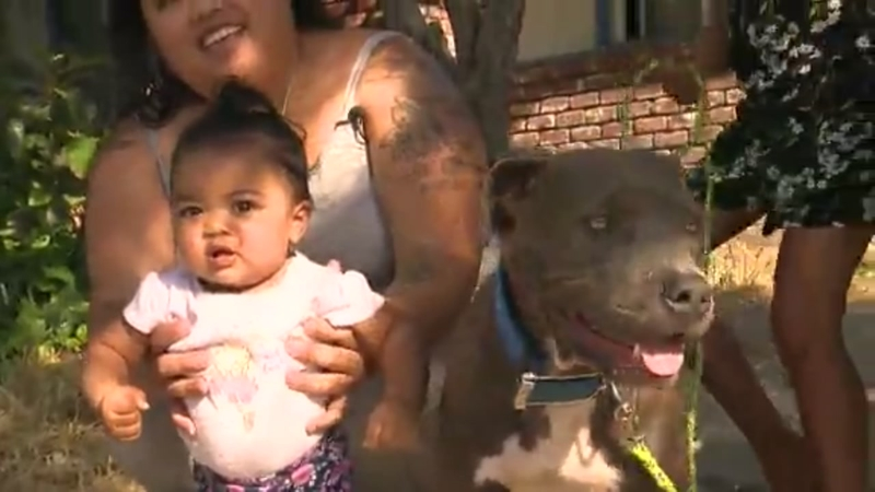 Pit bull saves baby from fire